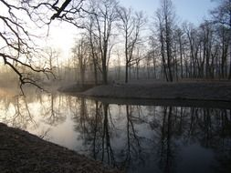forest pond in the early morning