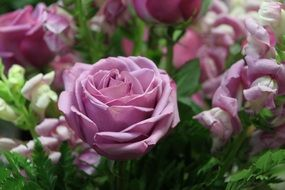 romantic fresh pink rose