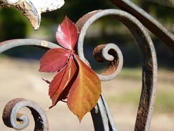 iron rustic leaves on the fence