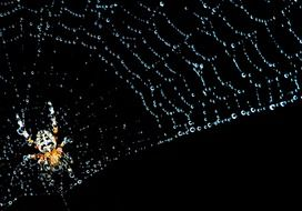 cobweb spider insect nature