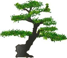Picture of bonsai tree