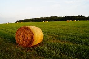 straw bale field meadow agriculture