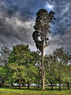 high tree in forest cloudly sky view