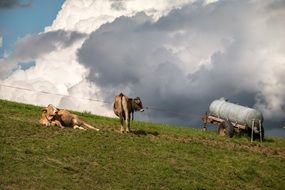 water tank and cows on a pasture in mountains