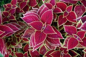 Beautiful colorful ornamental flowers