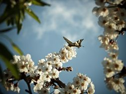 butterfly on a branch with white flowers