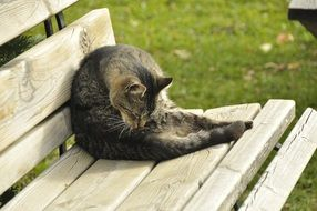 the cat licks itself on the bench