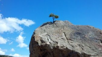 small green tree on a large rock