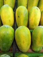 green papaya fruit for sale