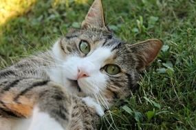 cat lays on its back on grass looking up