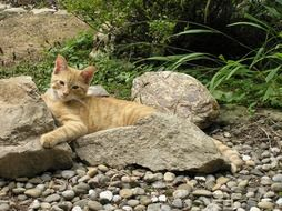 domestic cat on the stone