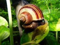 spiral snail close up