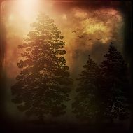 Coniferous trees in a mystical forest