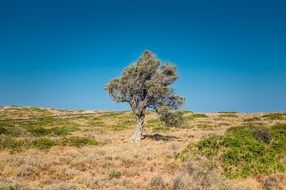 tree in the steppe