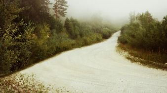 forest fog road scenery