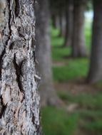 Tree trunk with bark closeup