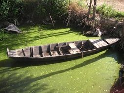 wooden boat in a green swamp
