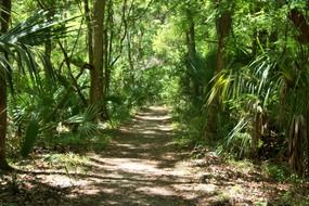 forest tree trail in florida