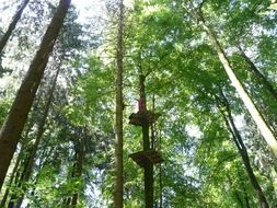 High ropes course in climbing forest