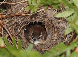 nestling in the nest among green branches