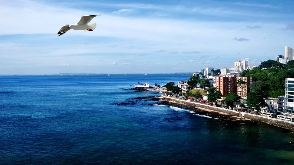 seagull flies over the coast of the city of Salvador