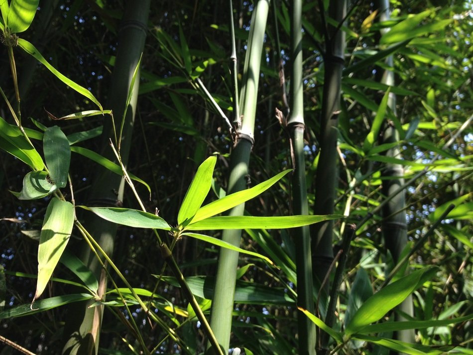 Bamboo leaves on bamboos background