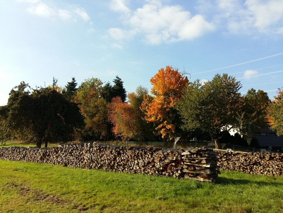 a lot of firewood on the background of the picturesque landscape of the autumn
