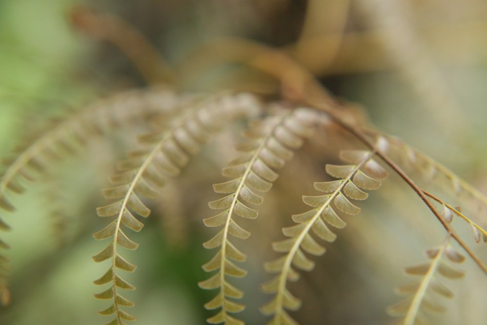 tiny fern leaves