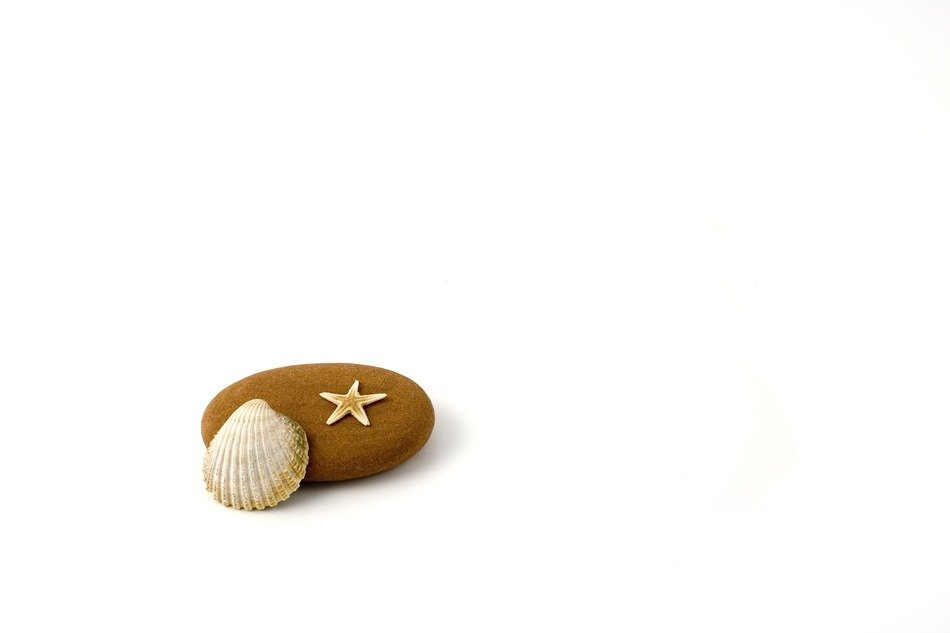 starfish, pebbles and shell