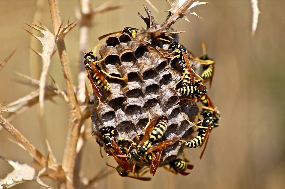 Wasps on a branch in a special place