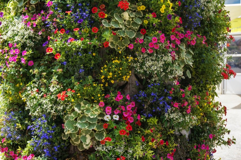 colorful flowers wall