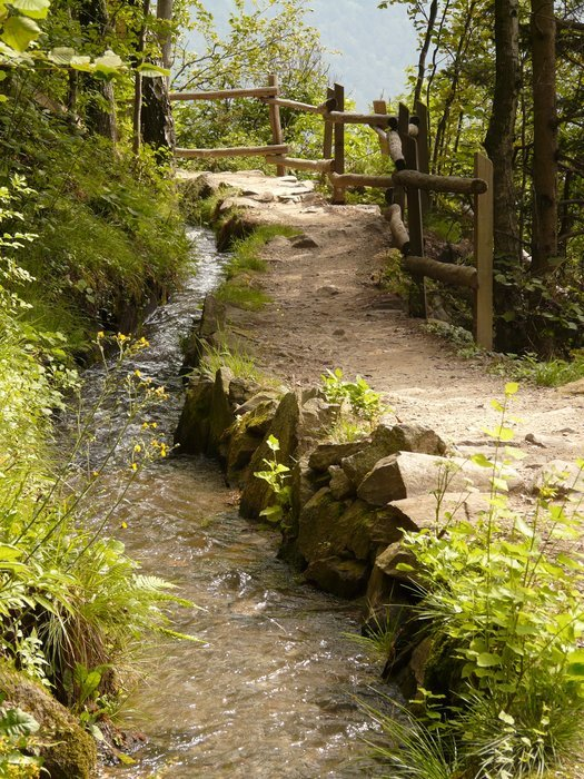 walking path with wooden railing along brook in forest with colorful plants