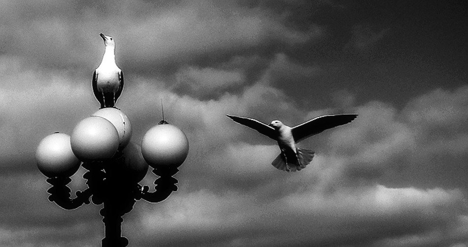 black and white photo of two seagulls, a street lamp against the backdrop of a stormy sky