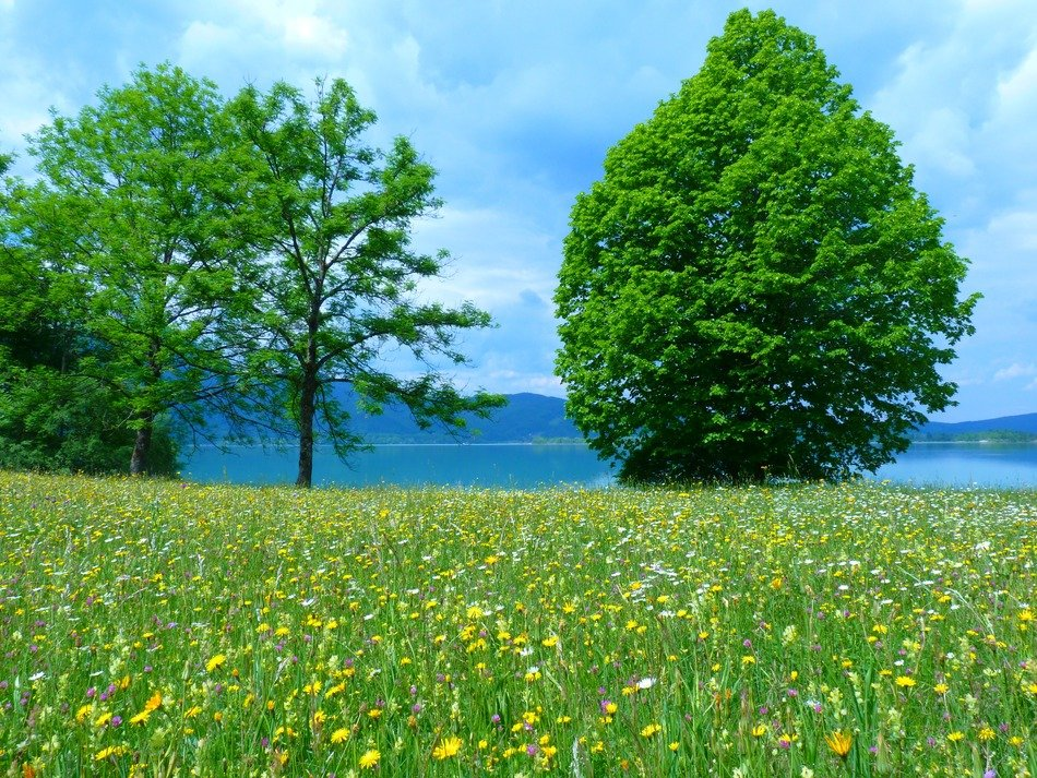 deciduous trees on a green meadow in summer