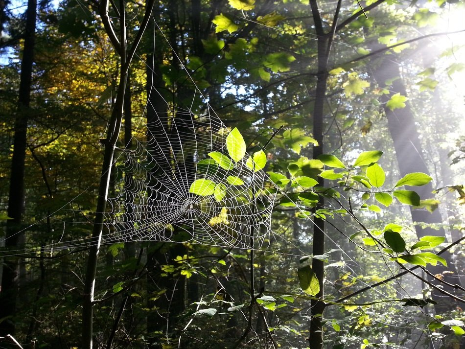 spider web in the forest in the glare of light