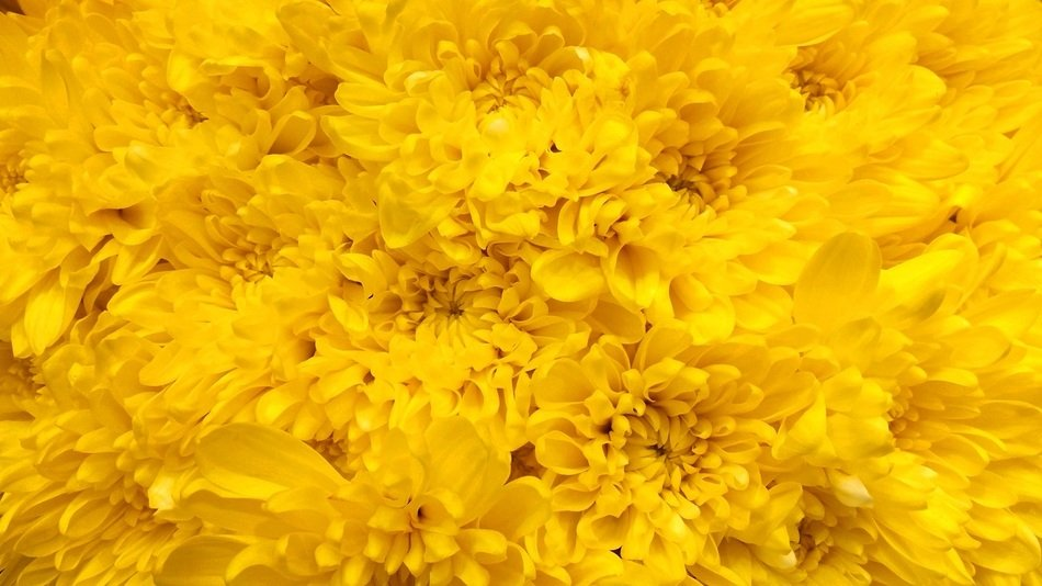 A lot of the yellow flowers in spring