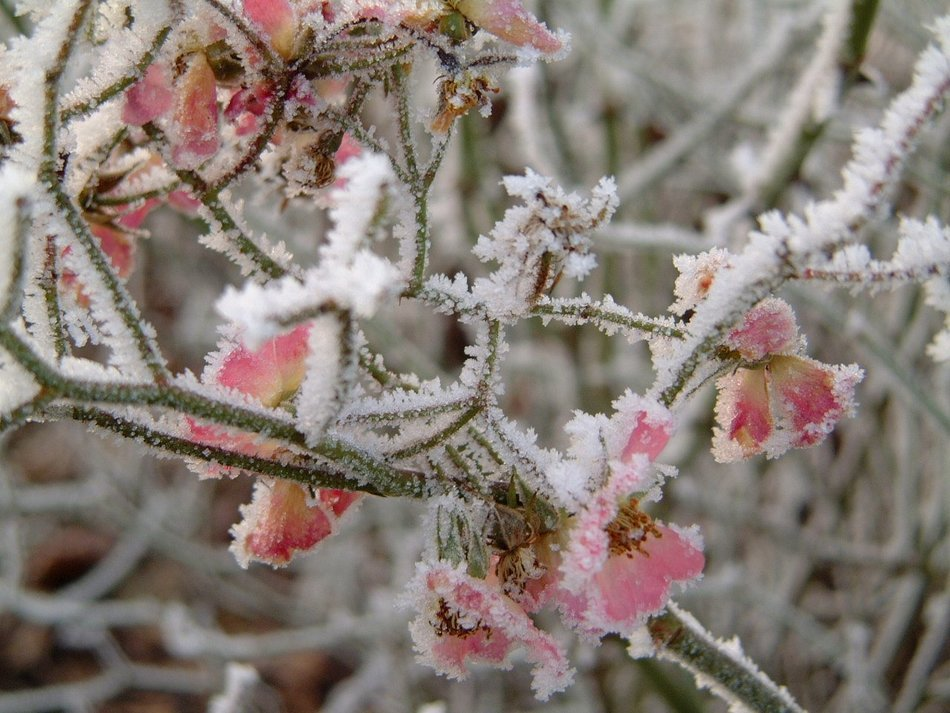 astounding winter frost plant