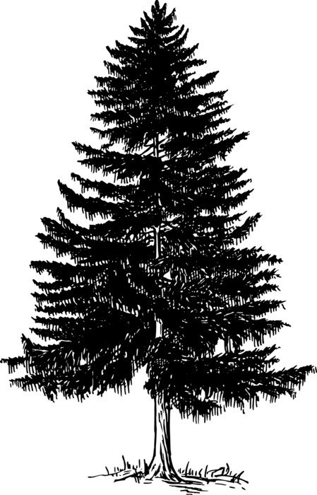 painted black pine on a white background