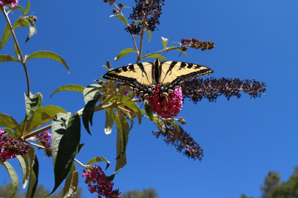 Butterfly on a branch with pink flowers