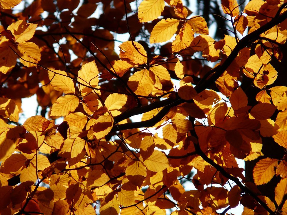 branch with yellow leaves in bright light