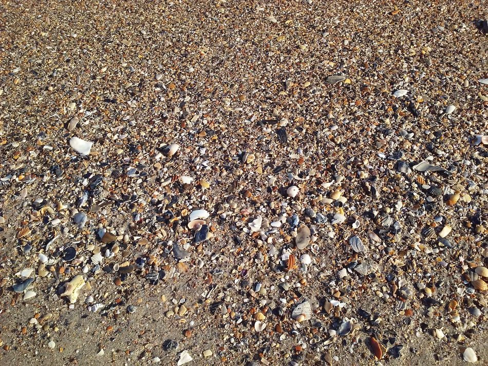 shells sea vacation