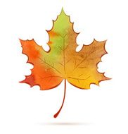 Autumn maple Leaf, artwork