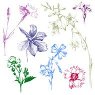 hand drawn spring flowers N2