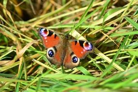 Butterfly on green leaves of grass