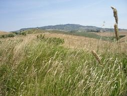 field plants in Tuscany, Italy