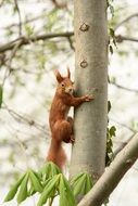 squirrel on a tree trunk with green leaves