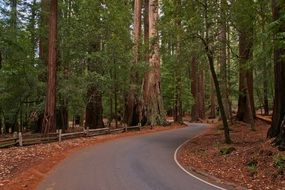 road redwoods forest trees