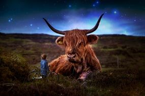 beef scotland highland cow
