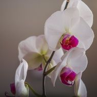 white orchids as decorative flowers