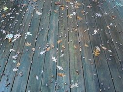 autumn leaves on deck